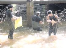 ??  ?? Una vez más se procedió a limpiar el arroyo Amambay.