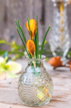 ??  ?? Budding crocus flowers in a cut glass vase, their bulbous heads contrasting with the narrow leaves, bring the promise of spring to a rustic table. Upturned heads of cheery winter aconites, hyemalis, are paired with coy, nodding bells of snowdrops in a simple beaker display.