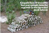 ??  ?? A log pile from 10 trees after four years growth (note the regrowth on the harvestedstools behind)