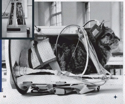 ??  ?? Solda: Tüm kedilere beyin aktivitelerini izlemek için cihazlar yerleştirildi