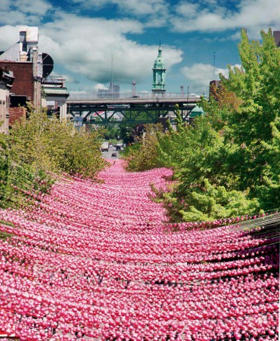 ??  ?? This page: the joyful effect created by the one- kilometre- long installation consisting of 170,000 balls in five shades of pink suspended five metres above Sainte-Catherine Street, Montréal. It has been repeated every year from 2011 to 2017 in the summer months