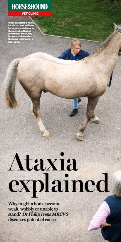 ??  ?? When assessing a horse for ataxia, a vet will look for any inconsistency in the normal pattern of movement, which may be more obvious when the horse is turned in a tight circle