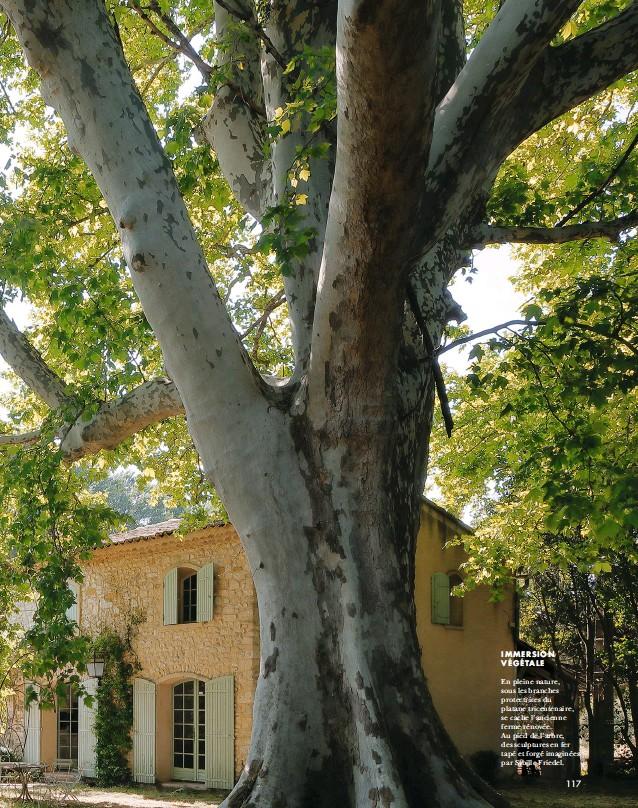 ??  ?? IMMERSION VÉGÉTALE En pleine nature, sous les branches protectrices du platane tricentenaire, se cache l'ancienne ferme rénovée. Au pied de l'arbre, des sculptures en fer tapé et forgé imaginées par Sybille Friedel.