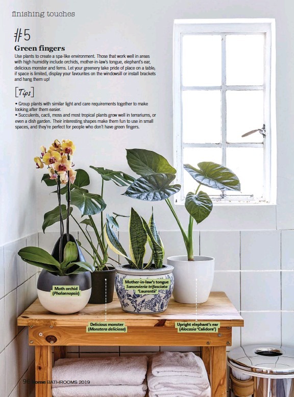 ??  ?? Moth orchid ( Phalaenopsis) Mother-in-law's tongue Sansevieria trifasciata 'Laurentii' Delicious monster ( Monstera deliciosa) Upright elephant's ear ( Alocasia 'Calidora')