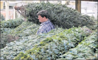 ?? ALEXA WELCH EDLUND/ TIMES-DISPATCH ?? Nick Atkinson unloaded Christmas trees at The Great Big Greenhouse on Huguenot Road in Chesterfield County onWednesday. Sales there are up 42.4% for the year.