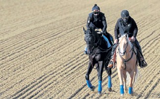 ?? Rob Carr, Getty Images ?? Kentucky Derby winner Medina Spirit, left, is walked over the track during a training session for the upcoming Preakness Stakes at Pimlico Race Course on Saturday.