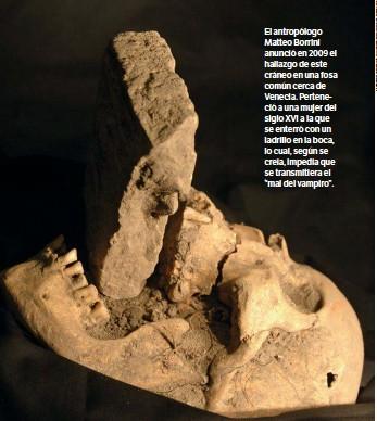 """??  ?? El antropólogo Matteo Borrini anunció en 2009 el hallazgo de este cráneo en una fosa común cerca de Venecia. Perteneció a una mujer del siglo XVI a la que se enterró con un ladrillo en la boca, lo cual, según se creía, impedía que se transmitiera el """"mal del vampiro""""."""