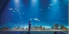 ??  ?? Durch diese riesige Scheibe kann man im Tierpark Hagenbeck in Hamburg die Haie beobachten.