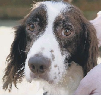 ?? PICTURES: SUSSEX POLICE ?? The dogs are a mix of lurchers and spaniels