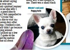 ??  ?? Minnie's sad past: Puppy farm