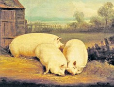 ??  ?? Prize porkers: Sleeping Pigs by the British artist William Henry Davis (1783-1865)
