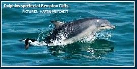 ?? PICTURES: MARTIN PRITCHETT ?? Dolphins spotted at Bempton Cliffs