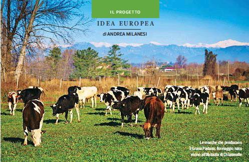 ??  ?? Le mucche che producono il Grana Padano, formaggio nato vicino all'Abbazia di Chiaravalle