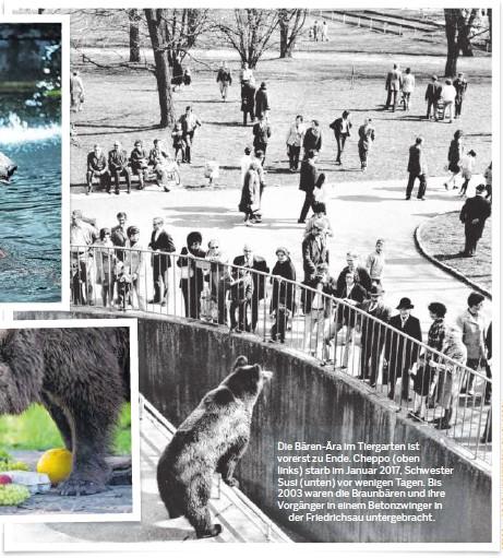 ??  ?? Die Bären-ära im Tiergarten ist vorerst zu Ende. Cheppo (oben links) starb im Januar 2017, Schwester Susi (unten) vor wenigen Tagen. Bis 2003 waren die Braunbären und ihre Vorgänger in einem Betonzwinger in der Friedrichsau untergebracht.