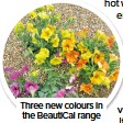 ??  ?? Three new colours in the BeautiCal range