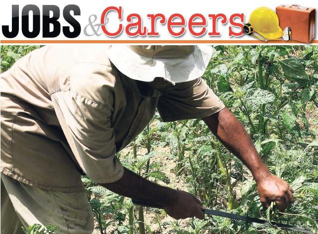 PressReader - The Star (Jamaica): 2016-06-30 - Small company seeks