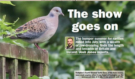 ??  ?? Yorkshire's fourth Oriental Turtle Dove, of the form meena, was a real surprise when it was found at Easington on the unseasonal date of 2 July. It was present until 7th.