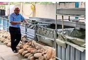 ?? — Handout ?? Chairman of Kohijau Professor Richard Ng at the NGO's fish farm.