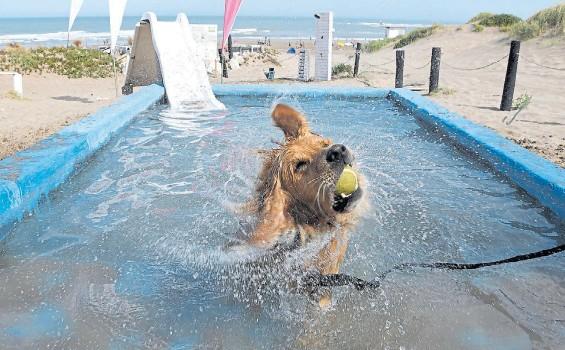 ?? FOTOS: MARCELO CARROLL ?? Juegos. En el balneario hay piletas para los perros. Es la séptima temporada consecutiva en que funciona el parador.