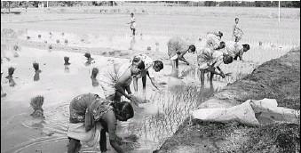 ??  ?? izvestia. ru На российские прилавки плоды труда производителей риса из Индии не попадут