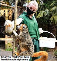 ??  ?? BEASTLY TIME Zoos have faced financial nightmare