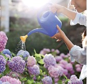 ??  ?? Look after your summer garden by watering it properly