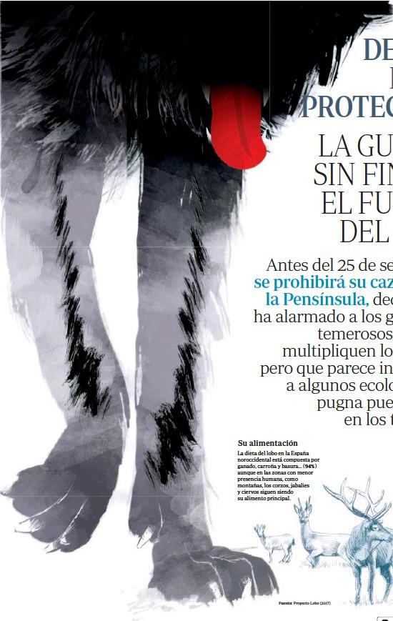 ?? Fuente: Proyecto Lobo (2017) ?? Su alimentación La dieta del lobo en la España noroccidental está compuesta por ganado, carroña y basura... ( 94%) aunque en las zonas con menor presencia humana, como montañas, los corzos, jabalies y ciervos siguen siendo su alimento principal.
