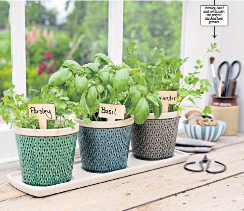 ??  ?? A sunny windowsill is the ideal spot for pots of parsley, coriander and basil