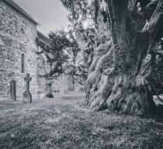 ??  ?? Dean Sephton – Sullington Church Yew
