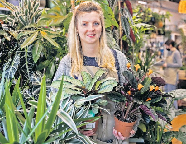 ??  ?? Hope Dean runs a plant and home interiors design shop called Wild Roots in Poole. Independent shops in the Dorset town are to be spared rent and business rates for two years under a new rejuvenation scheme