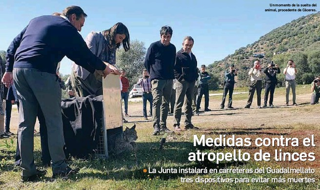 MEDIDAS CONTRA EL ATROPELLO DE LINCES