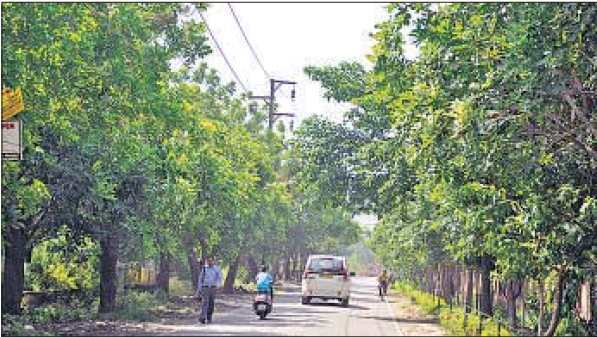 Trees in this Vasundhara pocket need urgent pruning
