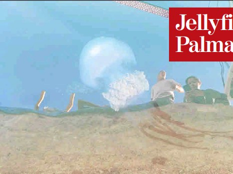 JELLYFISH ALERT AT PALMA YACHT CLUB