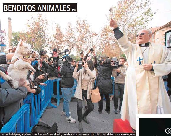 BENDITOS ANIMALES