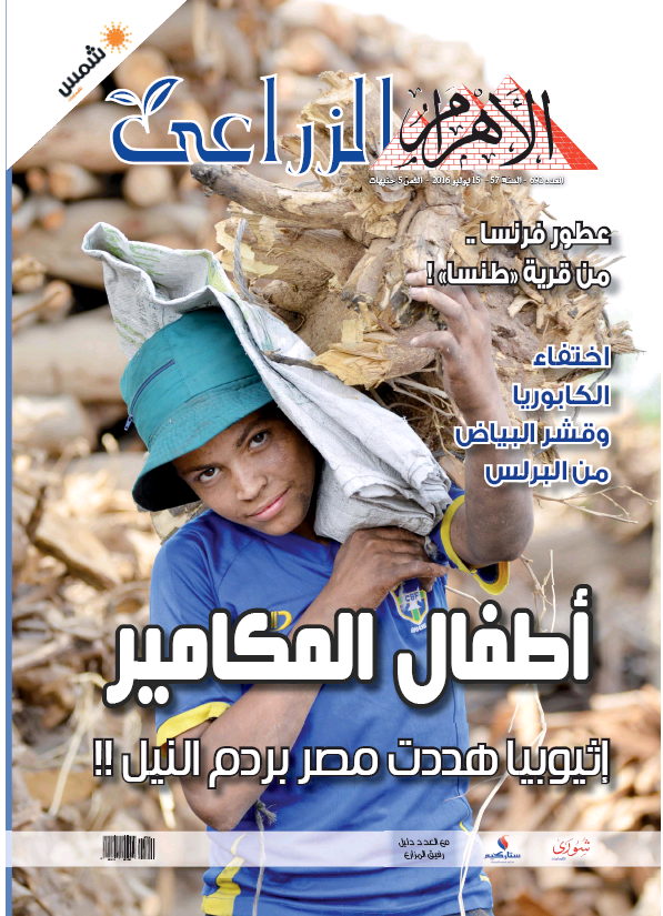 Read full digital edition of Alzeraaya newspaper from Egypt